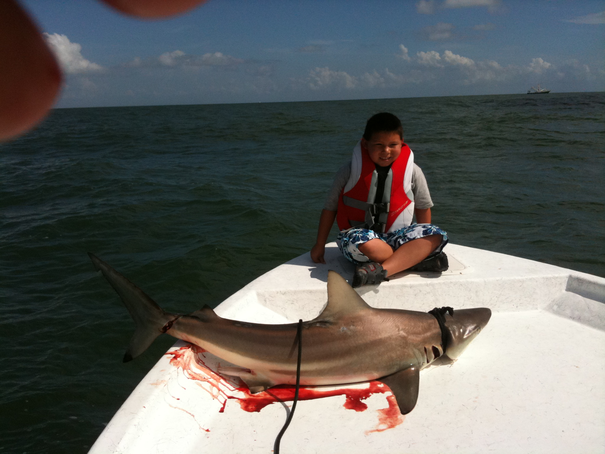 Galveston shark fishing all the best fish in 2017 for Fishing galveston tx