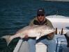 ling-tarpon-redfish-galveston