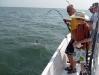 offshore-shark